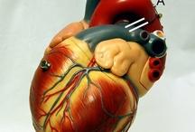 ACB (Coronary artery bypass surgery)
