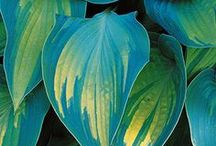 Gumpast leaves