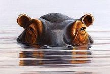 HIPPOS / by Catalina Perez Restrepo