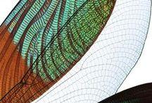 METAMORFOSIS / Como se percibe la metamorfosis en la naturaleza, el arte, la literatura... Concepto S-S 2015! Observado desde las fases: Huevo, Oruga- Larva, Capullo -  Ninfa, Crisalida– Pupa, Transformación.