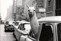laugh / Funny taxi moments!