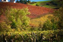 Vineyard in the world...