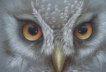Owls, squirrels / Owls