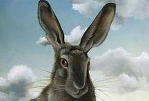 Rabbits, hares / Rabbits,hares