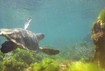 plonger sou-marine   / vive le poisson !!!!!!