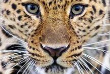 . Wildlife .