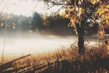 ::: autumn :::