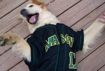 Patriot Pets / If you care to share, post a photo of your pet showing his/her Mason spirit and we'll add it to our board. You can post it on our Facebook wall, or send it to us at masonmediarelations@gmail.com.