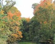 Fall Gardens at Hillwood