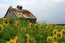 barn charm / my love of barns, silos and farm structures