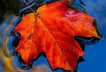 seasonal scenery / the colors of trees, leaves, etc. of the world....my gosh they make my heart sing :-)