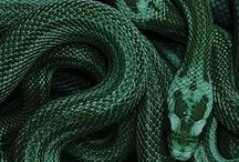House of Slytherin / The house of the snake, green and silver, the cunning, ambitious, clever and determinated. Named after Salazar Slytherin, guarded by a stone wall, with a house-ghost named The Bloody Baron. Head of the House is Severus Snape.