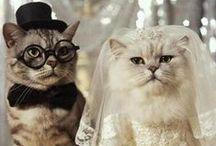 Weddings / by Anais Chacin