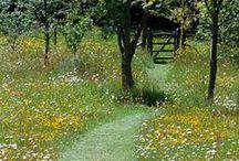 Puutarha: Polkuja puutarhassa