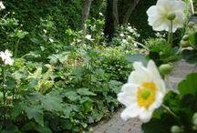 Opetus: Luonnonmukainen puutarha