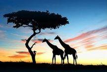 Travel. {Africa}