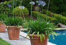 Jardins : Pots
