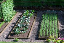 Jardins : Jardin Potager