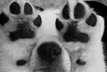 Animals ♘   / Love animals #pretty #love #love #love haha
