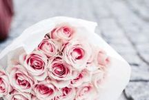 ROSE ALL OVER