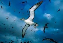 Animal ♞ Bird