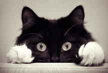 Animal ♞ Cat