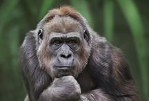 Animal ♞ Primate