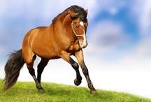 Animal ♞ Horse