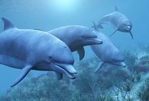 Animal ♞ Dolphin