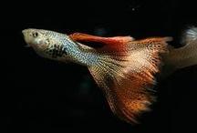 Animal ♞ Fish