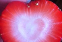 Heart Shaped Wisdom / We want to connect with other souls by collecting hearts!  We would love to share your personal heart-shaped pictures to help other souls understand that LOVE is always present, and we are never left to wander alone.   (Please submit photo - first name, last initial, city and state to mollyfriedenfeld@gmail.com)