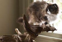 mews / kittens:)