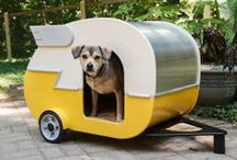 Dog Interiors