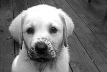 Muddy Dogs / #Muddy #Dogs