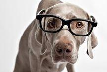 Dogs In Glasses / #Dogs In #Glasses