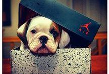 Dog In A Box / #Dog In A #Box
