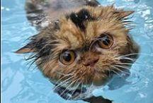 Wet Cats / #Wet #Cats