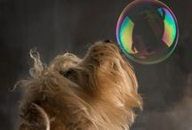 Dogs Love Bubbles / #Dogs #Love #Bubbles