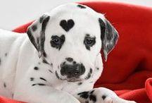 I Heart Dogs / i #Heart #Dogs