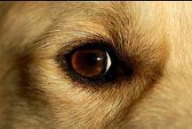 Time for your close up! / Time for your #close #up #Dog