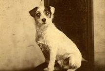 Dogs from the past / #Dogs from the #Past