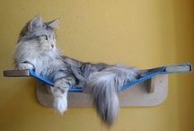 Houses, and Toy Ideas for Kitties!!!! / There are a lot of ideas here to make fun things for our kitties.....