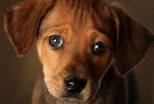 Puppy Dog Eyes / #Puppy #Dog #Eyes