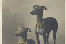 I love Whippets / Dogs