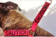 Pet Safety
