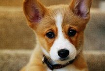 puppies / Because I love dogs