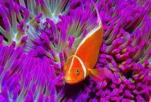Under the Sea / Sea life.