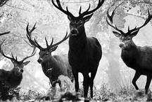 Wildlife Shots