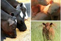 Farm Life / by Illinois Farm Families