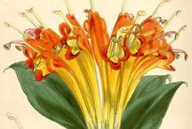 Botánica y herbolaria
